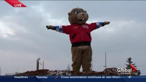 Balzac Billy anticipates an early spring