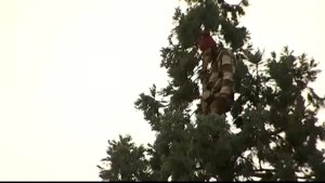 Bizarre 'Tree Standoff' in Seattle as man refuses to come down from 80-foot tree