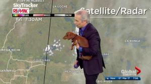 'Mike stole our dog!': Arthur the control room pup steals the show