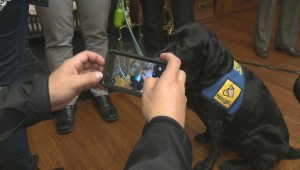 Manitoba service dog comforts child victims in court