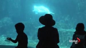 Vancouver hosts International Aquarium Congress