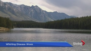 Parasite deadly to fish found Banff National Park lake