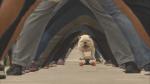 Skateboarding bulldog, blindfolded basketball player and a man running on all fours among new Guinness World Record holders