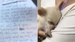 Puppy left abandoned at airport with note from domestic abuse victim
