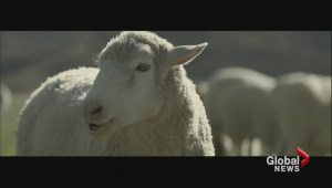 Best of Sunday's Super Bowl ads