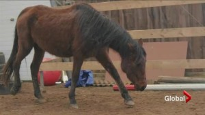 OSPCA says horses on Peterborough farm at centre of controversy getting care they require