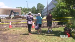 Greenfield Park flower bed controversy continues
