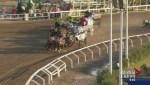 Second horse dies at Calgary Stampede