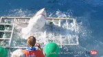 Great white shark breaks through diving cage in Mexico with man still inside
