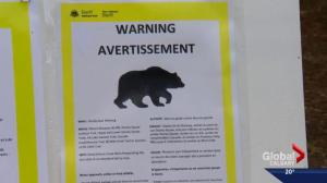 Bear warnings become the norm in Banff National Park