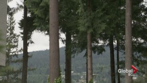 North Vancouver men fined $80K for cutting down 35 trees