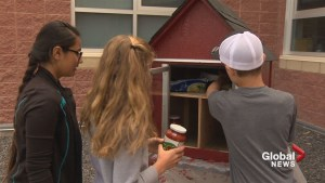 'Neighbours helping neighbours': elementary students build 'Little Free Pantries'
