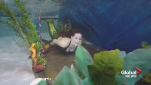 Mermaid magic: Calgarians have fun putting their best fin forward