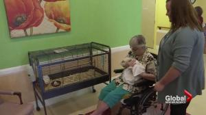 Pilot project aims to reduce amount of drugs used in nursing homes