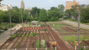 Urban farming in troubled neighbourhoods