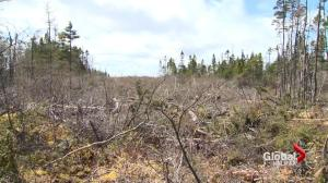 Companies charged with clear cutting at NS provincial park
