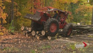 Bulldozing through Île-Perrot forest