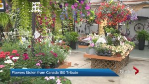 Canada Day flower display at King City garden centre stolen