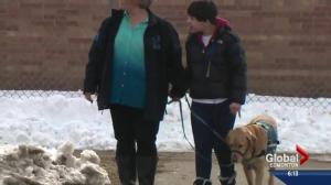 Edmonton seeing more fake service dogs