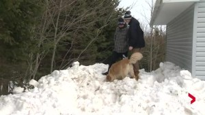Three trapped after snow fort collapses in Nova Scotia