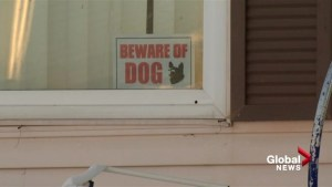 Dogs that attacked 4-year-old likely to be put down