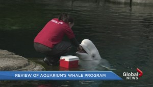 Review of aquarium's whale program