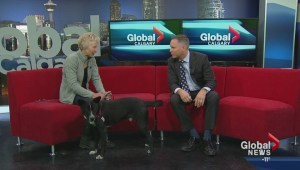 Interview: Sue Winsor, Cochrane Humane Society