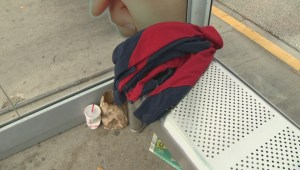 Winnipeg's bus stops littered with interesting finds
