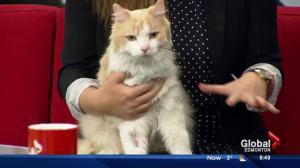 Edmonton Humane Society: Sammy & Ranger