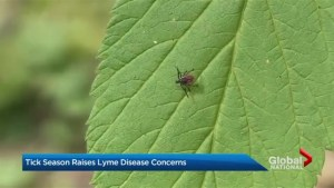 Tick season raises Lyme disease concerns