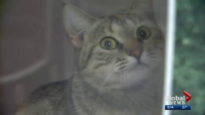Cats For Adoption Edmonton Spca