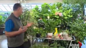 Gardening Tips: indoor house plants