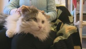 Adopt a Pet: Mar 16