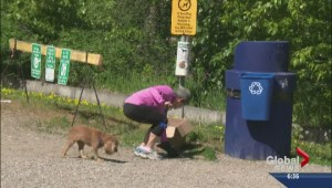 Poop patrol in Central Okanagan parks
