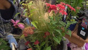 Gardening: Ornamental grasses