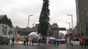 Montreal's Christmas tree disappointment