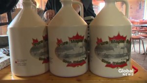 Southern New Brunswick maple syrup producers suffer unusually bad season