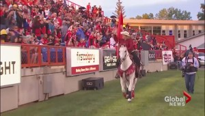 Calgary Stampeders' horse named Quick Six not allowed at Grey Cup game in Toronto