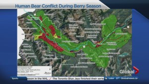 Your guide to recent bear activity in the Bow Valley