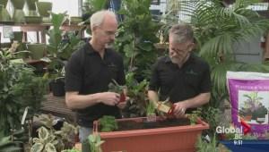 Gardening: Balcony Herb Planter