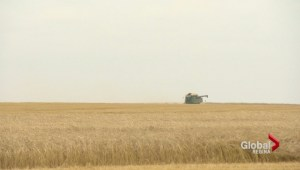 Grain shipping penalty