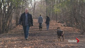 Angell Woods controversy continues