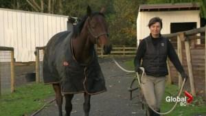 Teaching old Hastings racehorses new tricks