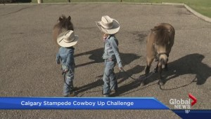 Cowboy Up at the Stampede