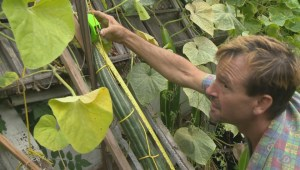 Check out this Kelowna man's giant cucumber!