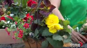 Gardening Tips: Mother's Day baskets and gifts