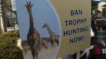 Protestors clash with hunters and their supporters at trophy hunting event in Vaughan