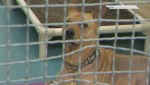 Animals seized from Langley home