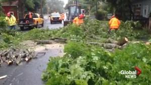 Tree limbs down in Bridgewater, NS