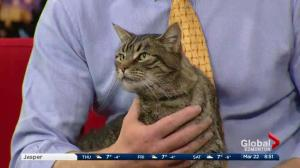 Edmonton Humane Society: Squints the cat